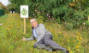 Blumenwiese-Balasch